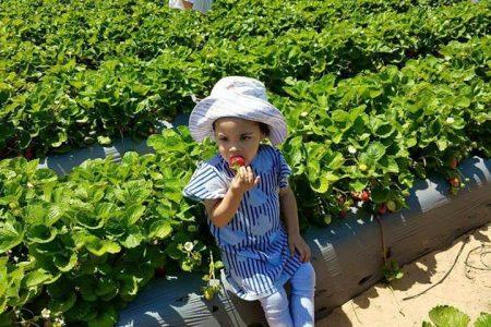 Season For Strawberries: Polkadraai Farm